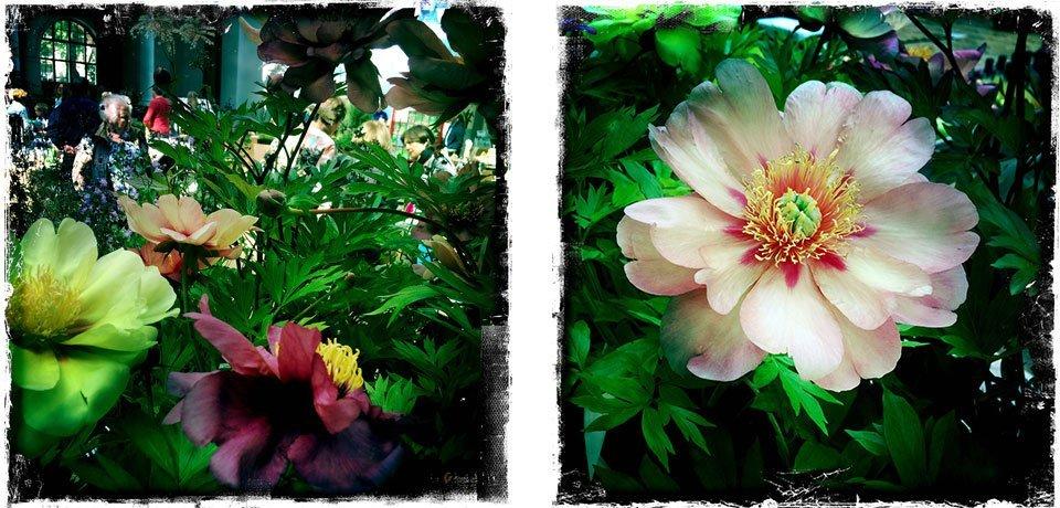 Secret-garden-sundays-7