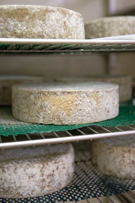 fromages ronds