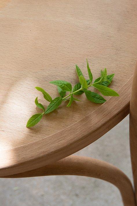feuilles de verveine
